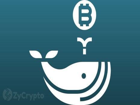 11 Yıl Sonra, Uyuyan Bir Bitcoin Balinası Büyük Bir BTC Zulasıyla Uyanır